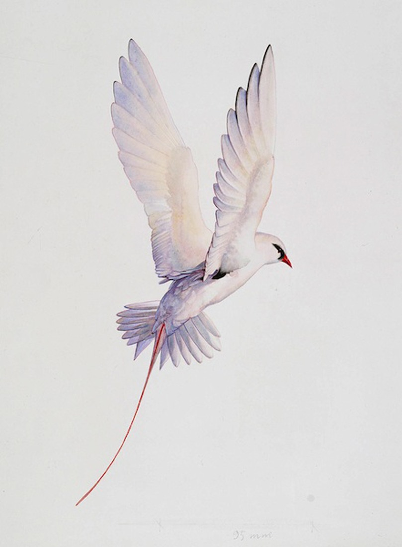 Tropicbird-AG-1992