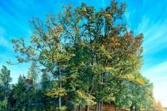 Herbstwaeldchen